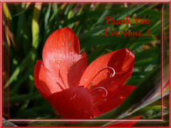 """40,000 VIEWS"" (frazz46) Tags: nature lily searchthebest soe redflower naturesfinest blueribbonwinner thankyoueveryone anyoneknowwhatitis 40000views mywinners pdpnw diamondclassphotographer flickristhebest"