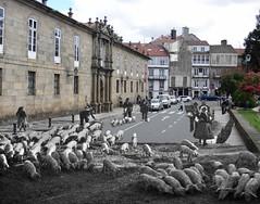 Hora Punta en Santiago de Compostela (Amio Cajander.) Tags: santiagodecompostela rushhour sanclemente 1925 trafico cerdo horapunta retronauta ruthmathildaanderson
