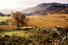 the cumbrian landscape (Dennis_F) Tags: uk autumn trees england lake mountains tree fall colors grass wall zeiss landscape rocks unitedkingdom stones district sony united herbst wide lakedistrict kingdom hills berge steine cumbria gras fullframe dslr landschaft bume lakeland ultra baum ssm thelakes langdale mauer farben felsen 1635 uwa thelakedistrict bleatarn weitwinkel ultrawideangle uww herbstlich a850 163528 sonyalpha sonydslr vollformat zeiss1635 sal1635z cz1635 sony1635 dslra850 sonya850 sonyalpha850 alpha850 sonycz1635