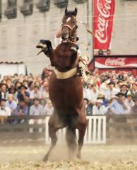 El lunarejo (Eduardo Amorim) Tags: horses horse southamerica caballo uruguay cheval caballos cavalos prado montevideo pferde cavalli cavallo cavalo gauchos pferd hest hevonen chevaux gaucho  amricadosul montevidu hst uruguai gacho  amriquedusud  gachos  sudamrica suramrica amricadelsur  sdamerika jineteada   americadelsud gineteada  americameridionale semanacriolla semanacriolladelprado eduardoamorim iayayam yamaiay semanacriolladelprado2010