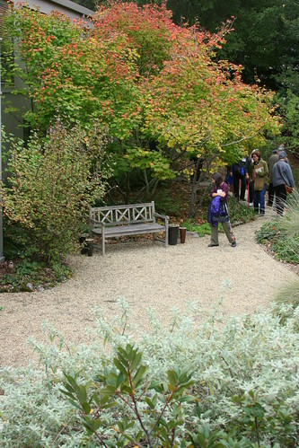 seating area with vine maple