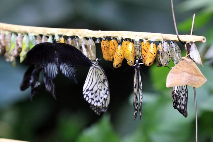 110710_butterfly06