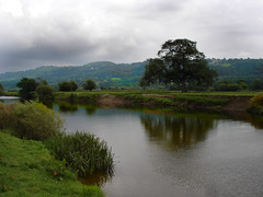 Anni's Favorite Tree. (M.R.7) Tags: wales carmarthenshire dryslwyn mhr welshflickrcymru towyvalley mikerees
