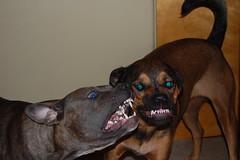 Evil Dogs