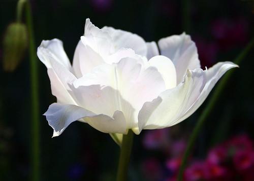 White Flower :)