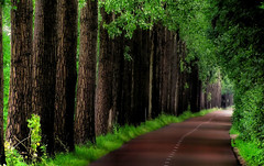 Lane towards castle Gunterstein (Bn) Tags: road topf25 topf50 topf75 utrecht lane topf100 topf200 dreamscape breukelen vecht blueribbonwinner 100faves 200faves p1f1 gunterstein anawesomeshot aplusphoto ibeauty holidaysvancanzeurlaub superbmasterpiece treesubject wowiekazowie ishflickr