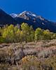 Turning Aspen (Jeffrey Sullivan) Tags: california usa nature canon landscape eos october fallcolors sierra eastern 2010 mountainhighworkshops sullivanworkshop