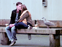 ok you distract her and I'll get the bagel ... (VARious moments ...) Tags: street birds animals kiss who seagull what peoplegeneric variousmoments allenrowley