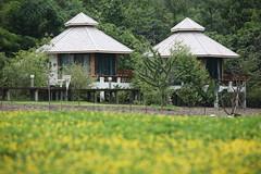 ฃฅฑ -  Cottages