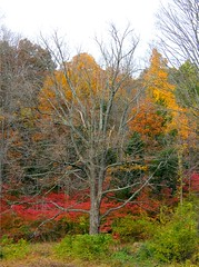 Late Autumn (Stanley Zimny (Thank You for 18 Million views)) Tags: park autumn trees red tree fall nature colors leaves automne catchycolors leaf colorful colours seasons natural fallcolors herbst nj autumncolors fourseasons autunno autumnal colorexplosion 4seasons ringwood sgis jesien jesiennie