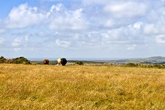 Sun and Grass (doublejeopardy) Tags: cornwall lanner carnmarth