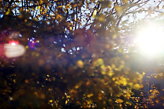 november sol