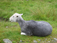 Another herdwick