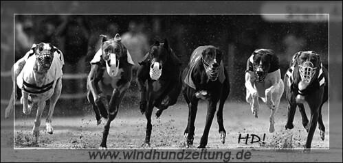 Greyhound-Finale - Greyhound Sixpack