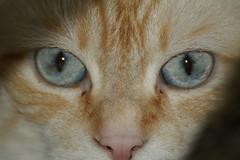 PICT3586 (Bonsai_San_77) Tags: cats cat augen katzen
