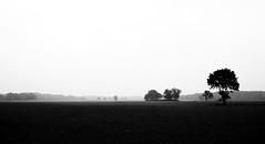 * (Olgierd Pstrykotwrca) Tags: autumn blackandwhite bw monochrome field pole soil jesie ziemia m43 gf1 czarnobiae micro43 panasonicgf1