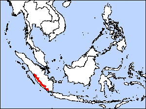 Sumatras zemes dzeguze (Carpococcyx viridis) 3
