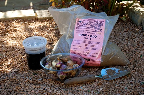 Hyacinth bulb prep