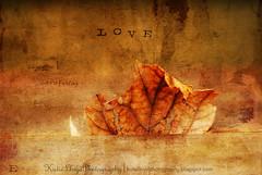 LeafLove-wm