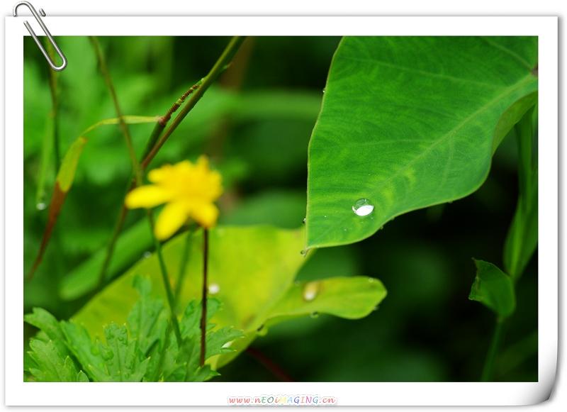 烏來內洞之花、淚、瀑
