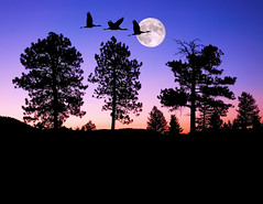 Night of the Cranes (Fort Photo) Tags: longexposure moon bird birds animal silhouette composite night photoshop dark landscape bravo colorado nightscape nocturnal searchthebest fort crane quality wildlife birding fortcollins fullmoon cranes fantasy ave co collins ornithology nocturne enhanced avian 2007 sandhillcrane digitalimaging digitallyenhanced magicdonkey 100faves 50faves specnature abigfave artlibre impressedbeauty superaplus aplusphoto flickrplatinum superbmasterpiece flickrelite