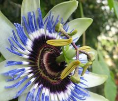 grazy flower (mr_sellars) Tags: pink blue red flower green rot nature yellow purple natur lila gelb grn blau blume bochum complex schwarz gruen grazy komplex complexflower anawesomeshot grazyflower