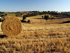 Fields of gold (Un ragazzo chiamato Bi) Tags: summer estate hill olympus polarizer umbria colline terni e500 fieldsofgold rotoballe zd 1445mm girovagando traacquaspartaeamelia