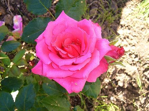 garden26-8-07-004
