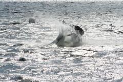 img_5389 (t.adebahr) Tags: sun water jumping small diving yamaha jetski ostsee stunts standup neustadt curving tauchen springen enge kurven steher mato99 jetboot jetboad