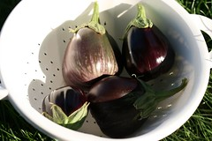 Homegrown Eggplant