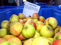Lustre Elstar Apples