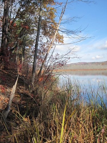 Carter's Pond