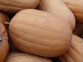 Oblong Smooth Pumpkins