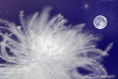 Fly me to the moon... (Prayer) (Devotional Fine Art Photography | Lars Basinski) Tags: sky moon photoshop stars feather unison sigma105mm supershot nikond80 superbmasterpiece diamondclassphotographer flickrdiamond larsbasinski clarsbasinski