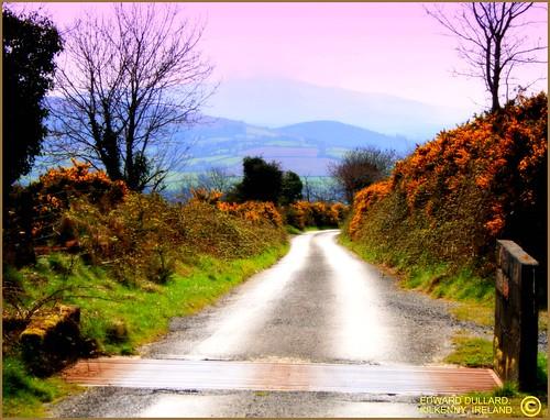 THE OLD BOG ROAD. KILKENNY, IRELAND. by EDWARD DULLARD.