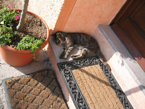 On Elba: Greek cats have nothing on Italian cats. This little wonder was a sight for sore eyes…