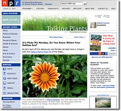 My Gazinia Photo Featured on NPR Talking Plants