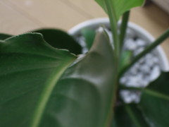 Green (TakuMa Y.) Tags: green leaf