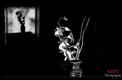 B n W .. (7) (Munira Fatima (Kaly Mun)) Tags: reflection flora silence bnw lightfall cantalk