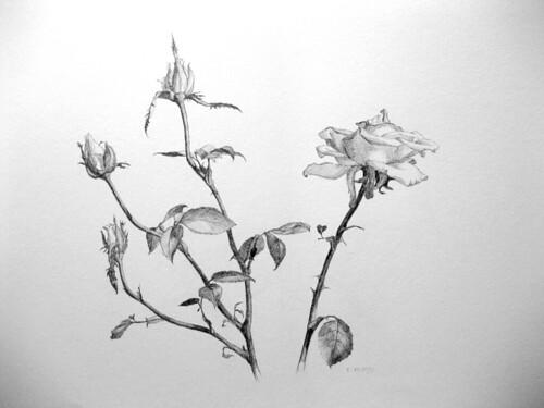 20100719 Roses II dwg 15 x 22