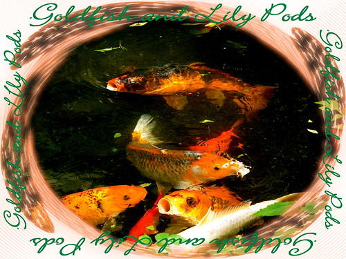 goldfish and lily pods