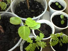 Dsc02815 (bvr_poste) Tags: passiflora