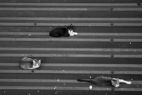 cat_2007-07-28N20