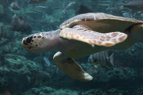 underwater shot of a sea turtle