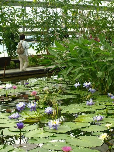 神戸花鳥園20070630 (48)