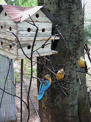 cabane et oiseaux.jpg