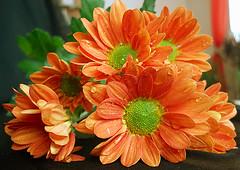 colorful (*Gitpix*) Tags: flowers autumn flower color leave nature leaves blossom herbst natur blumen blume blatt blte bltter farben blten