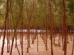 Tree line - by Balaji.B