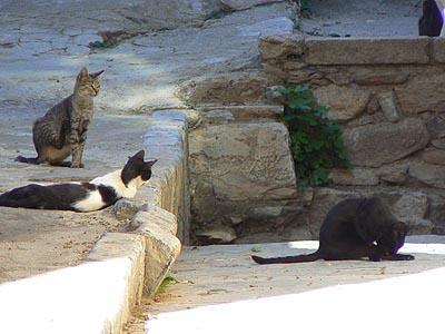 les chats de corte.jpg