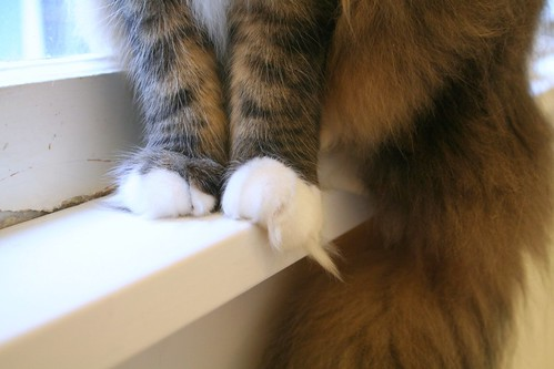 those paws